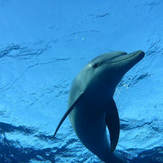 Delfinen